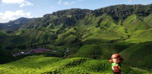 Tea Valley, Cameron Highlands, Pahang, Malaysia